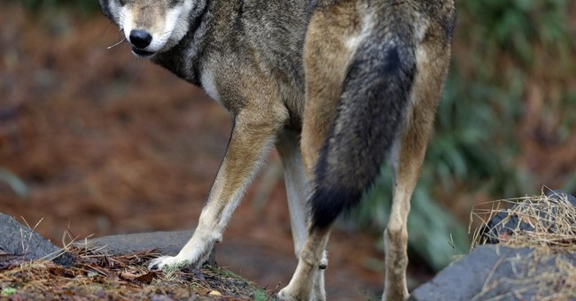 The Left is Panicking Over Much Needed Changes to the Endangered Species Act
