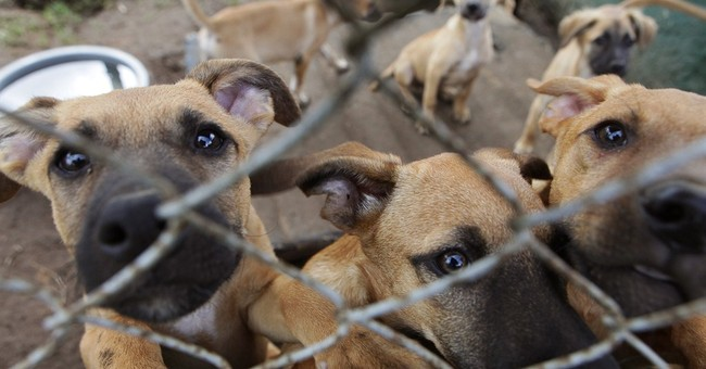 Animal Rights: Virginia PETA Shelter Has a 'Kill Rate' of 81 Percent