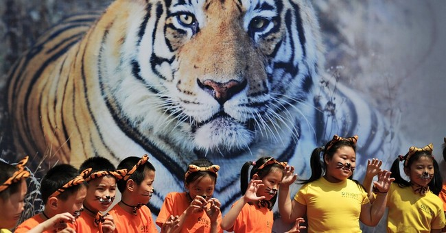 World's wild tiger count rising for first time in