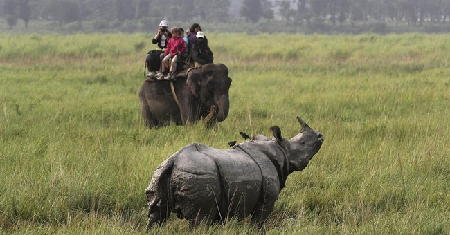As British royals head to Indian wildlife park, rhino killed
