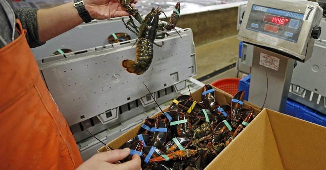 Shellfish behavior: US lobster industry at odds with Sweden