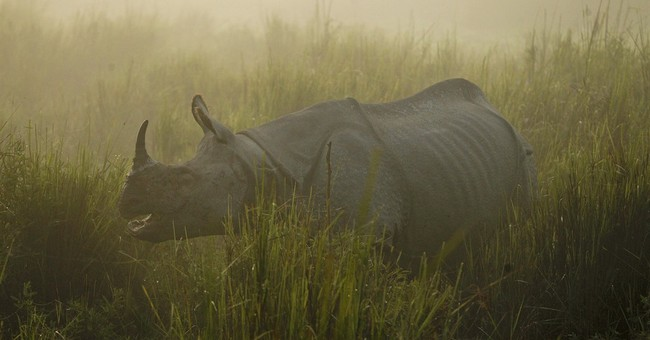 As British royals head to Indian wildlife park, rhino killed