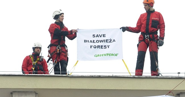 Greenpeace protests logging in Poland's rare primeval forest