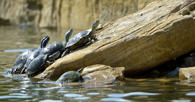 Rock ramps at North Texas park help turtles exit the water