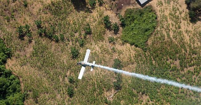Colombia resumes anti-coca spray dropped over cancer fears