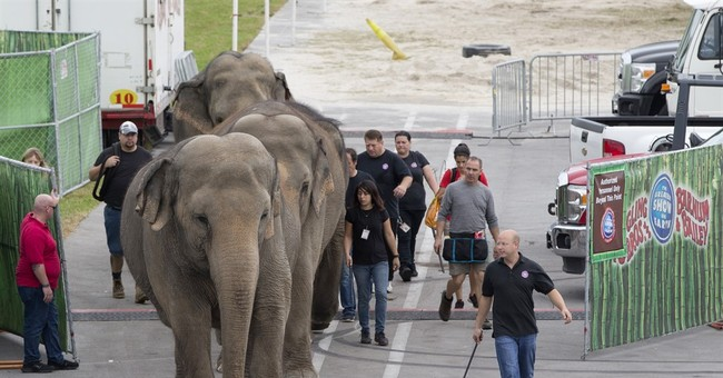 APNewsBreak: Ringling circus elephants to retire in May