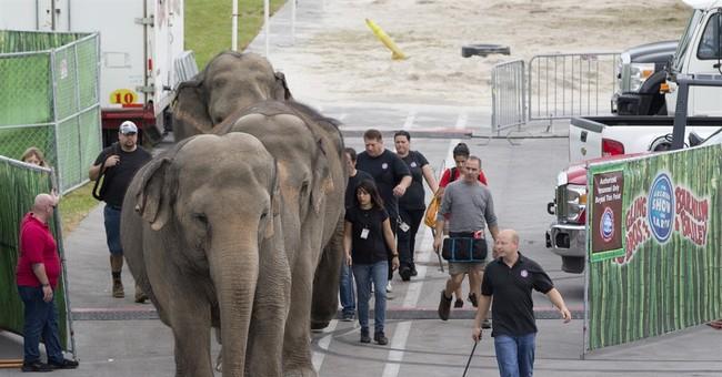 APNewsBreak: Ringling circus elephants to retire in May
