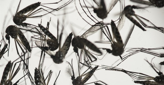 Worried about Zika, MLB players question Puerto Rico games