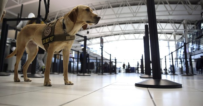 Senate passes bill that would boost airport security
