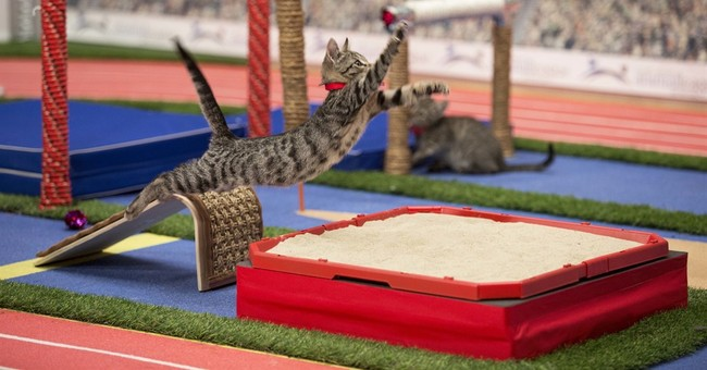 Tiny paw-thletes compete in Hallmark's Kitten Summer Games