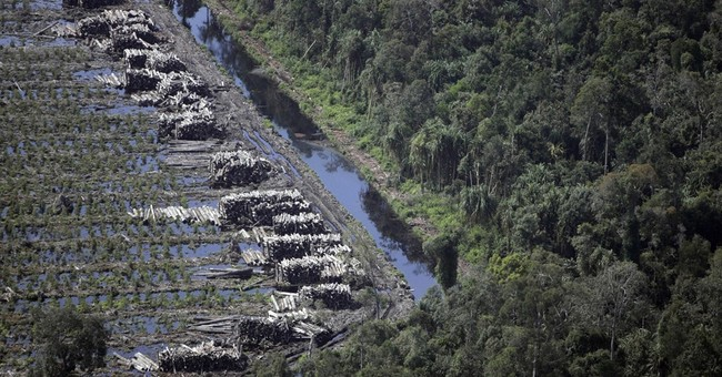 New Indonesia mill raises doubts about APP's forests pledge