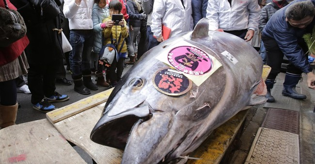 APNewsBreak: Sushi alert: Grim outlook for bluefin tuna