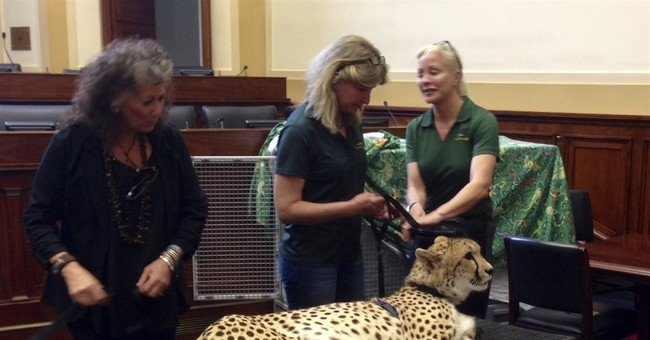 Capitol Hill Buzz: News media barred from cheetah briefing