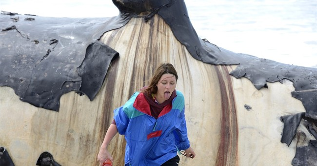 Onlookers marvel at size, stench of dead whale in California