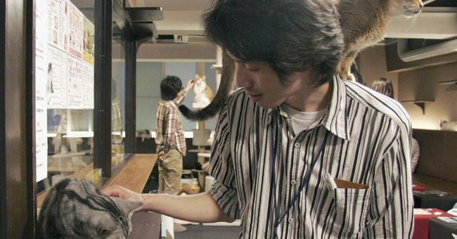 Cats at Japan's 'cat cafes' now allowed to stay up till 10
