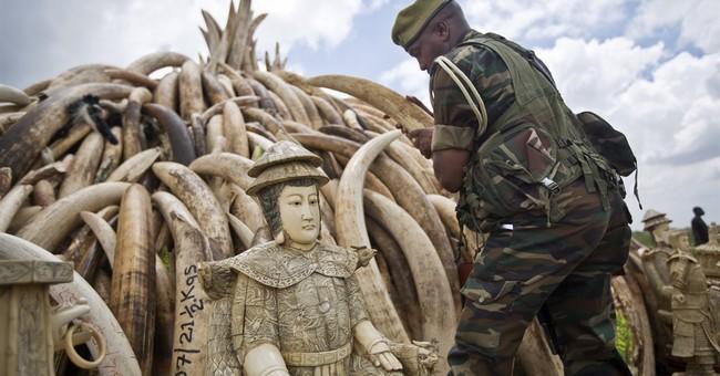 Kenya: Large pyres set up for massive burn of ivory