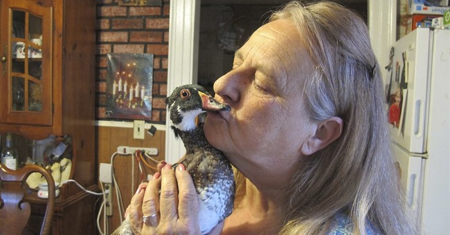 Vermont family to keep wood duck after state issues permit