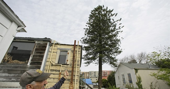 The Latest: San Francisco protects disputed tree in backyard