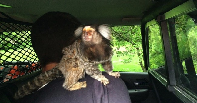 Driver had a monkey on his back even before he got arrested