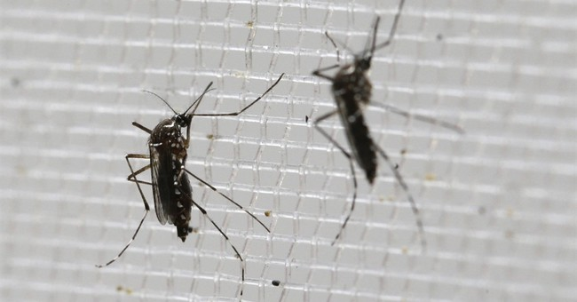 Panama reports 4 cases of Zika-related microcephaly