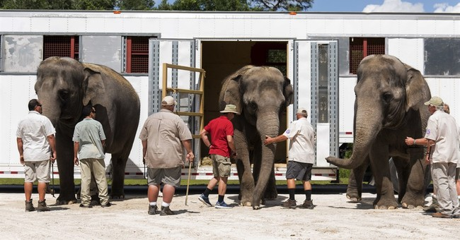 Unpack the trunk: Ringling's elephants retire to Florida