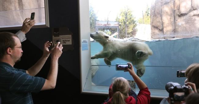 Polar bear cub named Hope makes debut at Toledo Zoo in Ohio