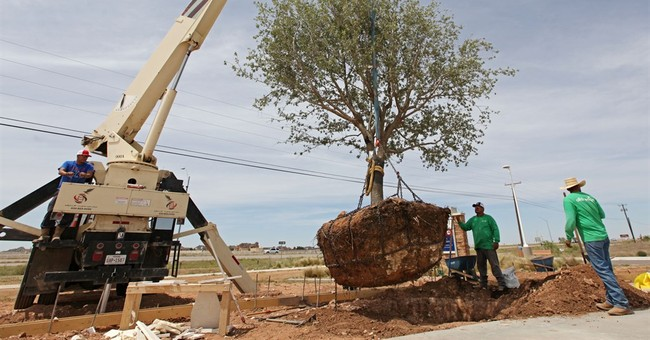 Trees from George W. Bush ranch part of Chris Kyle memorial