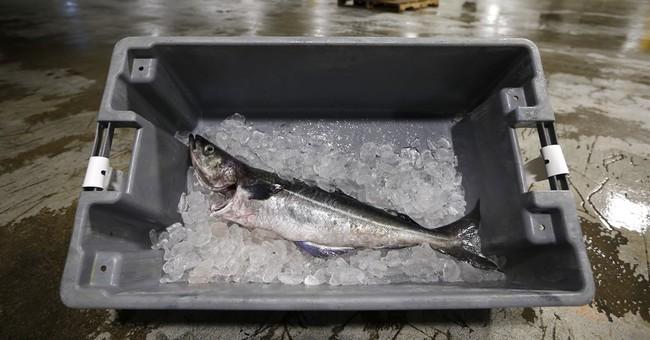 Misunderstood pollock a key to New England seafood's future