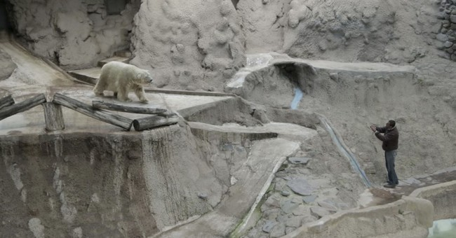 Argentina zoo worried about decaying health of polar bear
