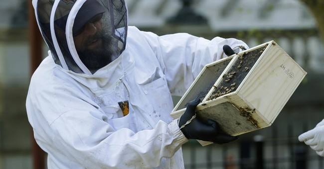 This stings: Winter death rate for America's bees jumps