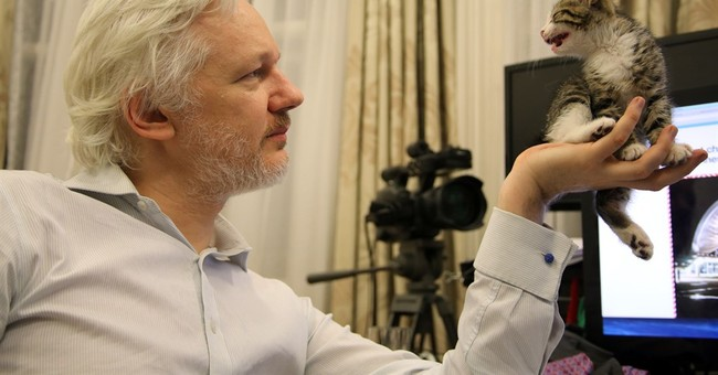 WikiLeaks' Julian Assange gets kitten to keep him company