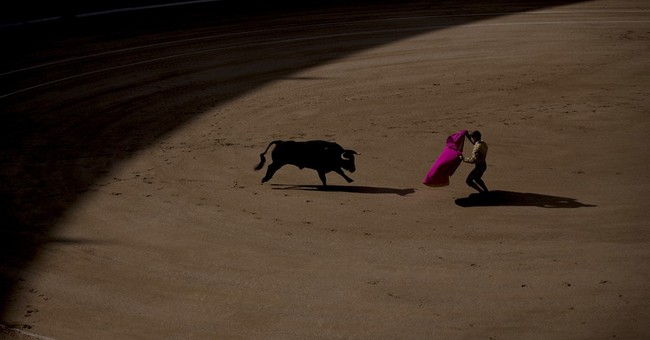 Spain: Bullfight tensions rise with new political landscape