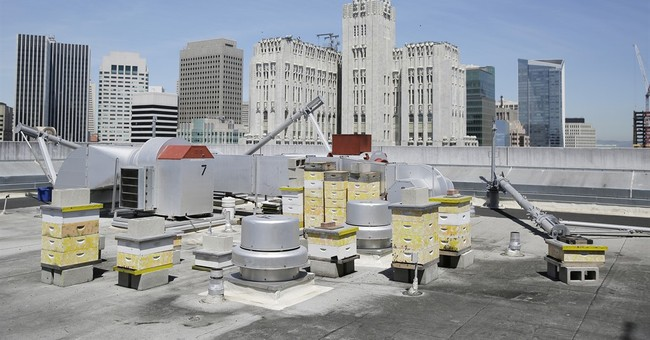 Hotels build buzz for eco-efforts with rooftop beehives