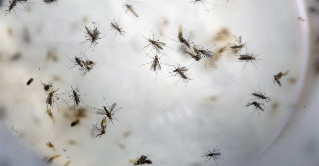 After 3 months, Congress ready to act on Obama's Zika call