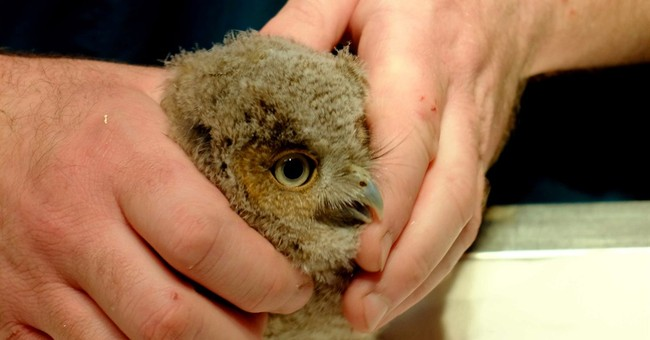 TV meteorologist running on trail rescues baby screech owl