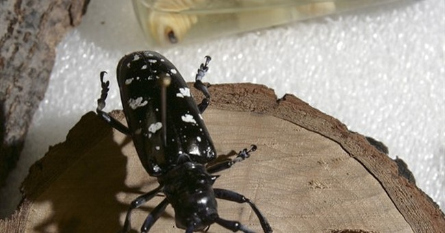 Imported forest pests cause $2 billion in damage annually