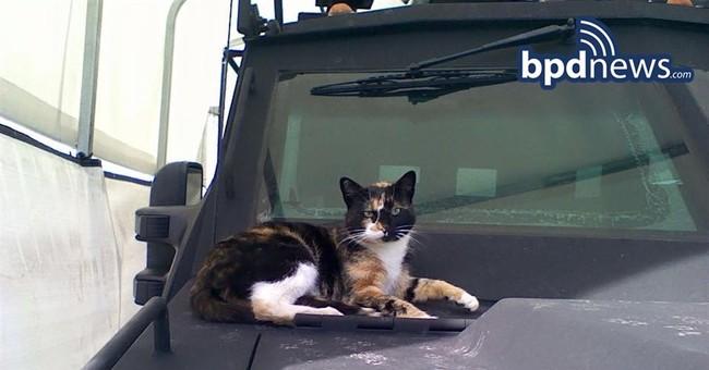 SWAT Cat is back! Boston police team's mascot returns home