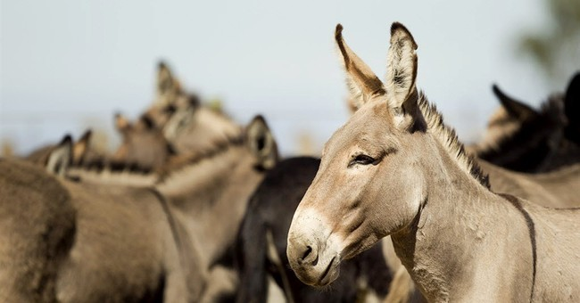 Donkeys up for adoption in Hawaii, but only in pairs