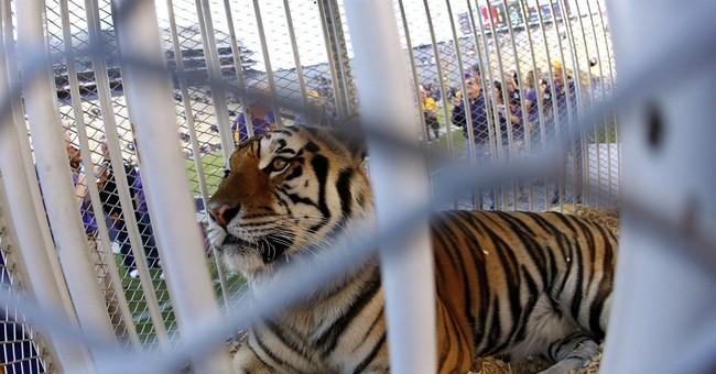 PETA asks LSU to stop using captive tigers as mascots