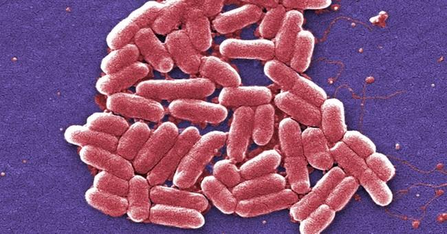 Report: 1st US case of germ resistant to last resort drug