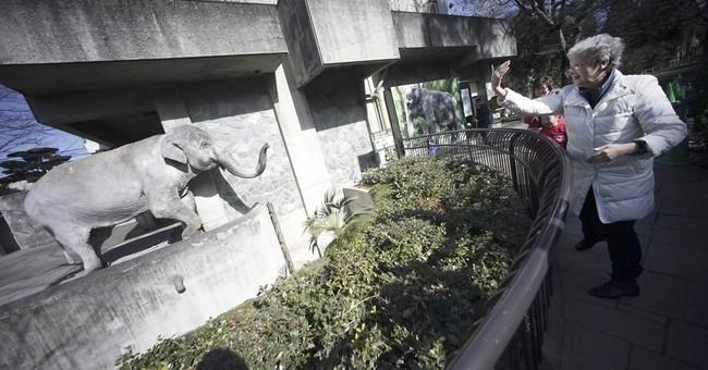 Elderly elephant named in petition drive dies in Tokyo zoo