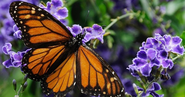 Bees, butterflies to get better habitat along Interstate 35