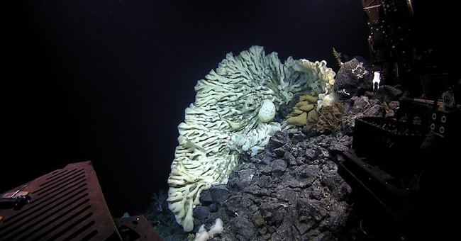 Scientists find minivan-sized sponge, world's largest