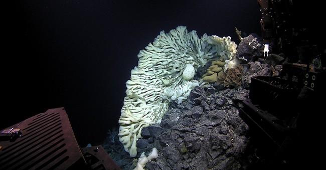 Scientists find minivan-sized sponge, world's largest
