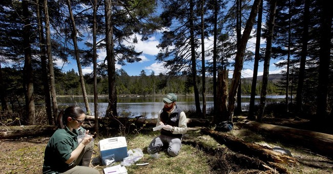 Saving salamanders: Searching for signs of a deadly fungus
