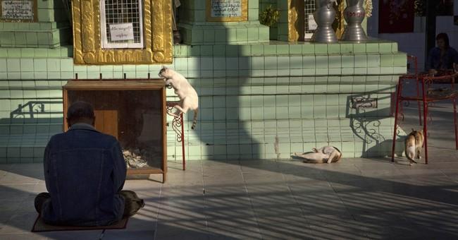 Image of Asia:  Cat in monastery in Myanmar