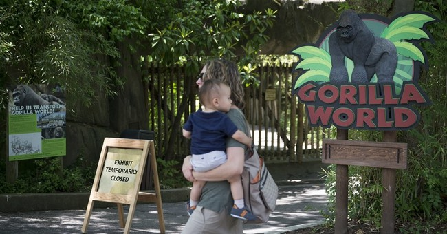 The Latest: Family of boy in gorilla exhibit says he's fine