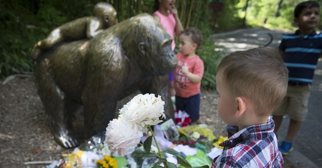 The Latest: Prosecutor to discuss zoo investigation Monday