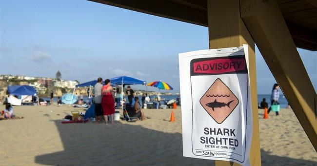 Suspected shark attack halts swimming at California beach