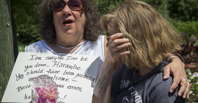 The Latest: Jack Hanna backs decision to kill gorilla at zoo